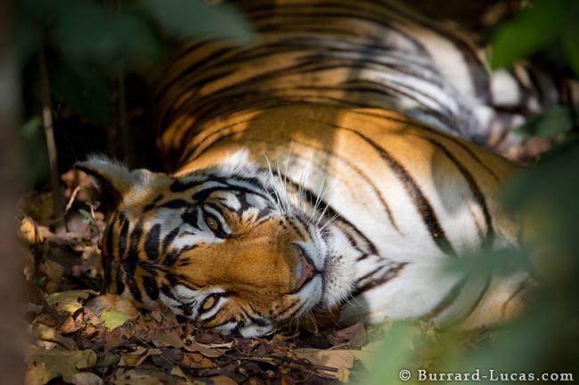 Как снимают диких зверей