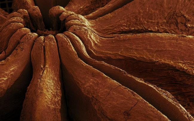 Еда через микроскоп
