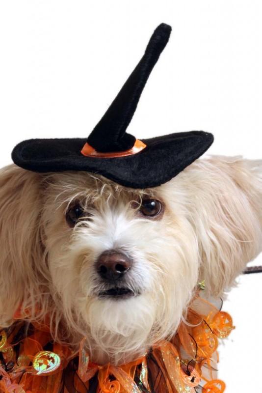 Хэллоуин для домашних животных