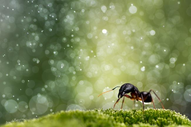 Красочный мир насекомых