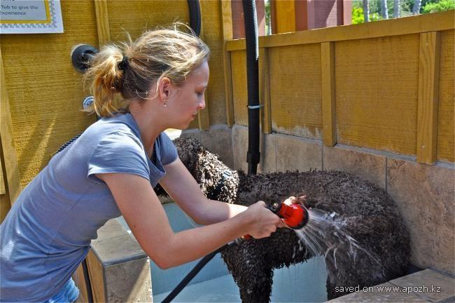 Водные процедуры у собак