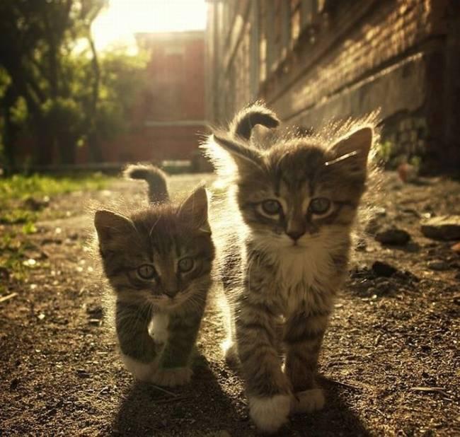 Прикольные коты