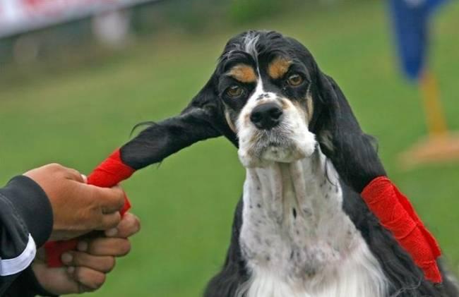Прикольные собаки