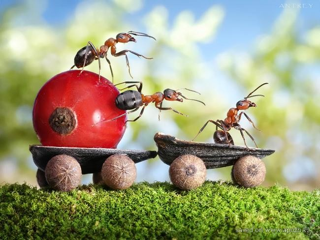 Дрессированные муравьи