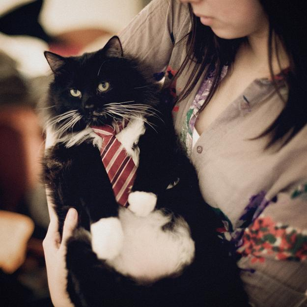 Элегантные коты