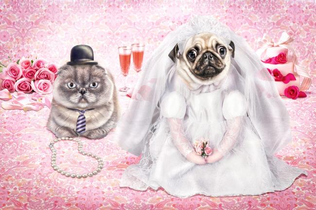 Яркие иллюстрации Kirsten Wilmink