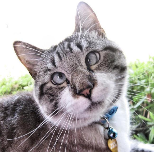 Косоглазенькая кошка