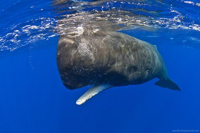Захватывающий подводный мир