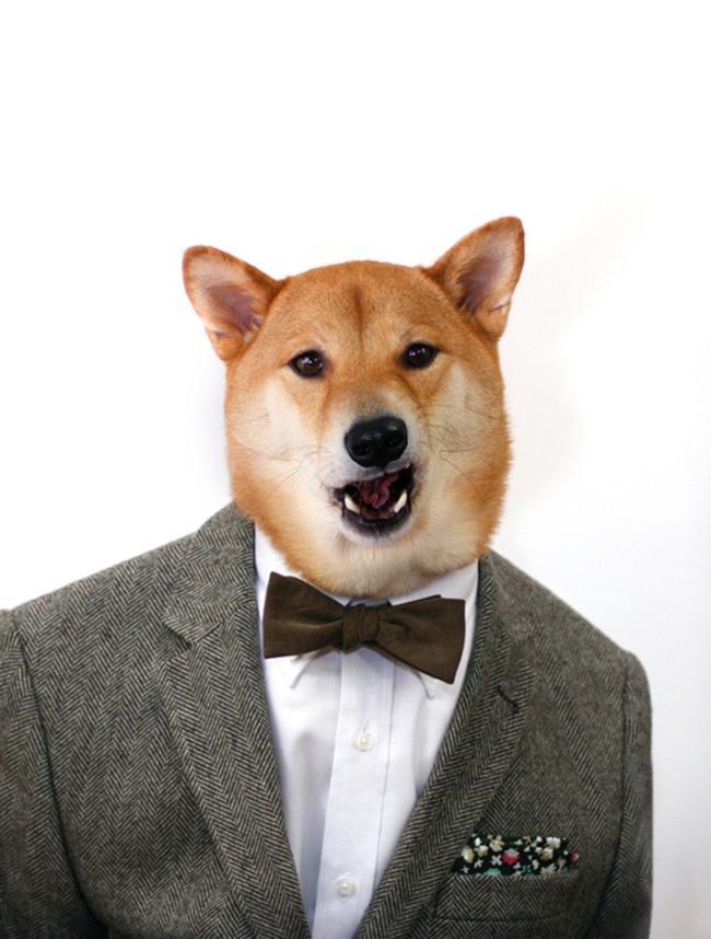 Собака которая модно одевается