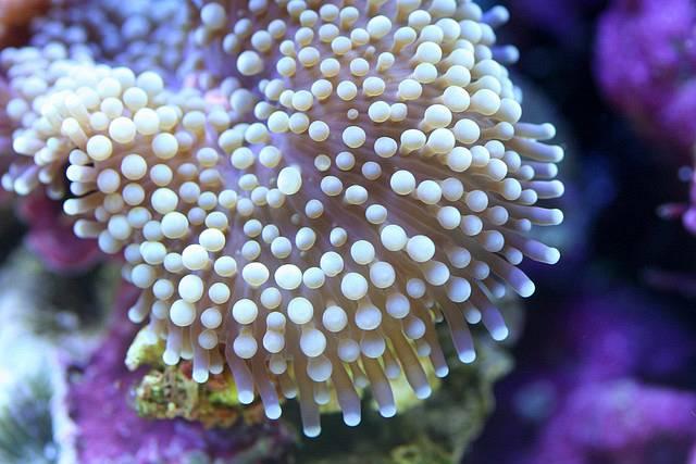 Кораллы крупным планом