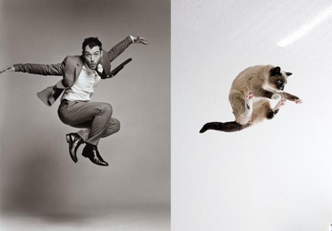 Мужчины как коты