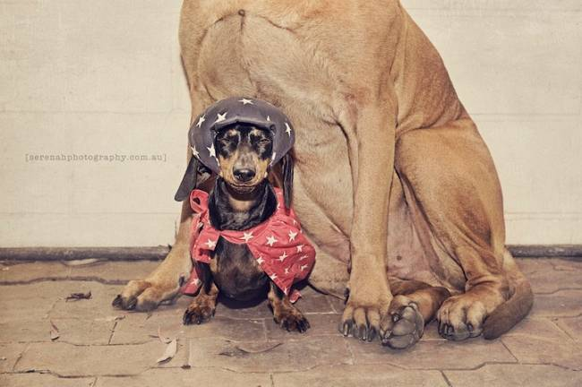 Симпатичные собаки