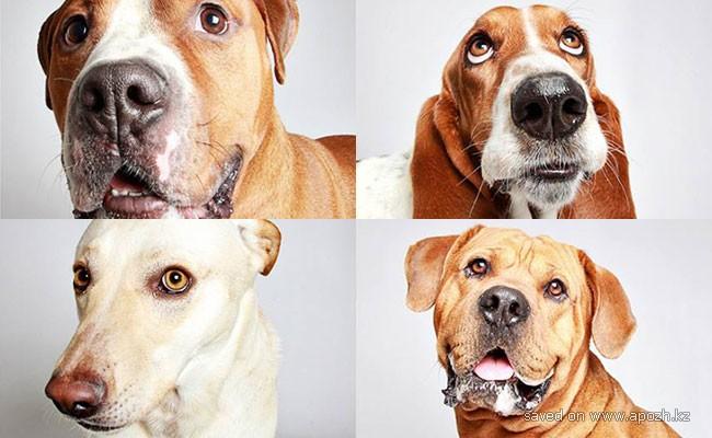 Собаки строят гримасы